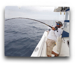 Sport fishing action on board our charter boat