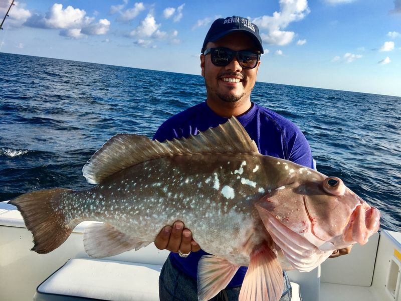 Off shore hustler fishing charters are mistaken